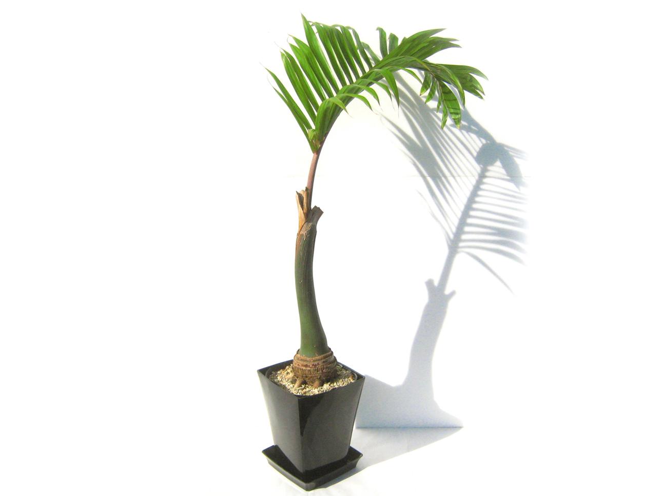美容室に向いている植物